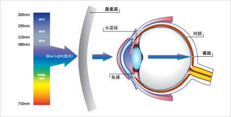 蓝光可射到网膜